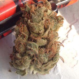Order Bubba's Gift Strain Online,Order Bubba's Gift Weed,Order Bubba's Gift Strain,Buy Bubba's Gift Cannabis,Buy Bubba's Gift Marijuana ,Buy Bubba's Gift Marijuana ,Buy Bubba's Gift Strain